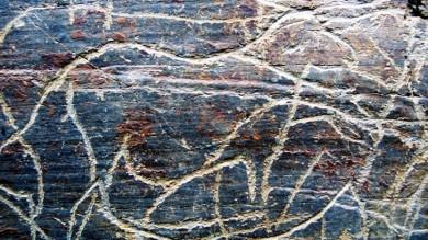 Grabado del Palelolitico Superior, en Foz de Côa, Portugal.